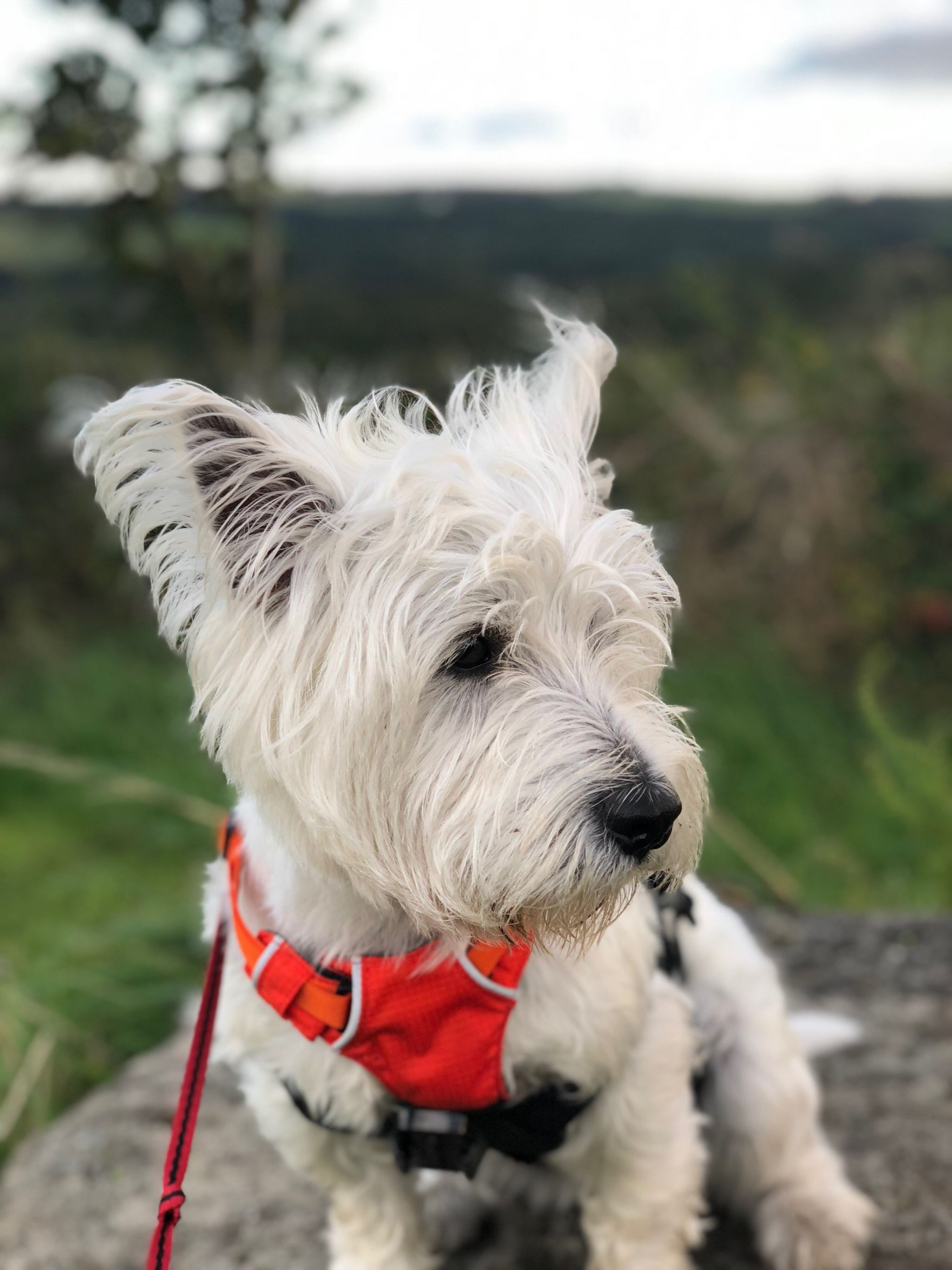 Exploring Derwent County Park & Our 1 Year Borrowmydoggy anniversary!