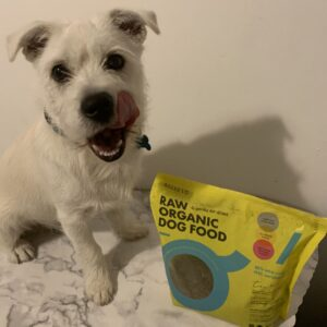 Is Rocketo raw dog food good for your dog? | Review