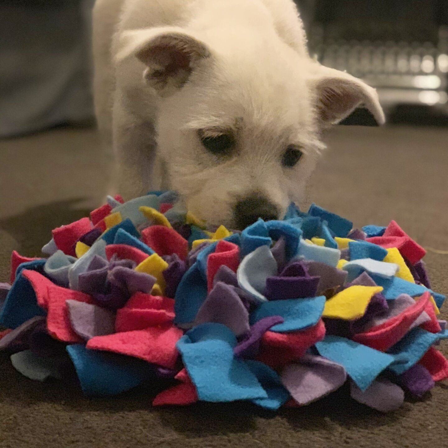 westie puppy playing with a snuffle mat for enrichment.