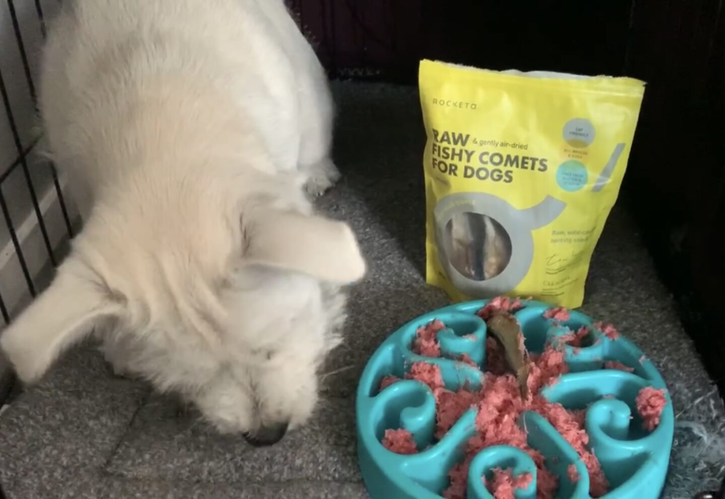 Rocketo raw fishy comets and raw dog food being eaten by a westie