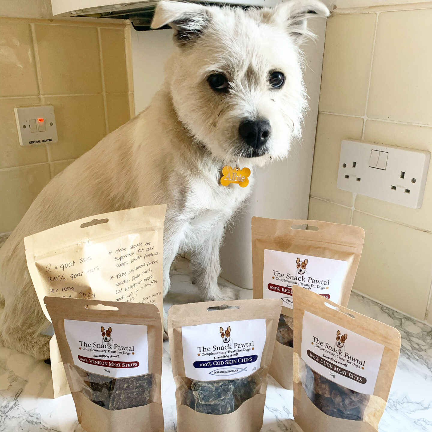 The Snack Pawtal natural raw diet treats for dogs sat next to a westie dog.