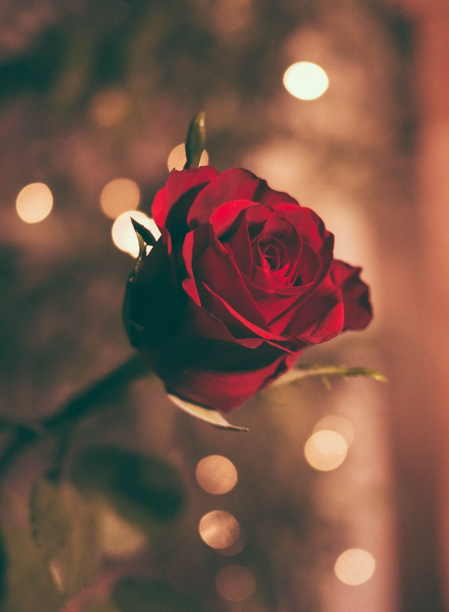 Romantic gifts to make them happy this Valentines day
