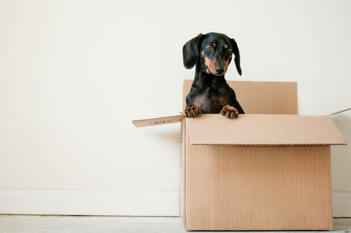 10 moving tips that will make moving house easier